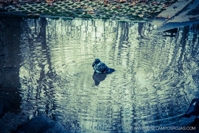 20110317_010_Bologna